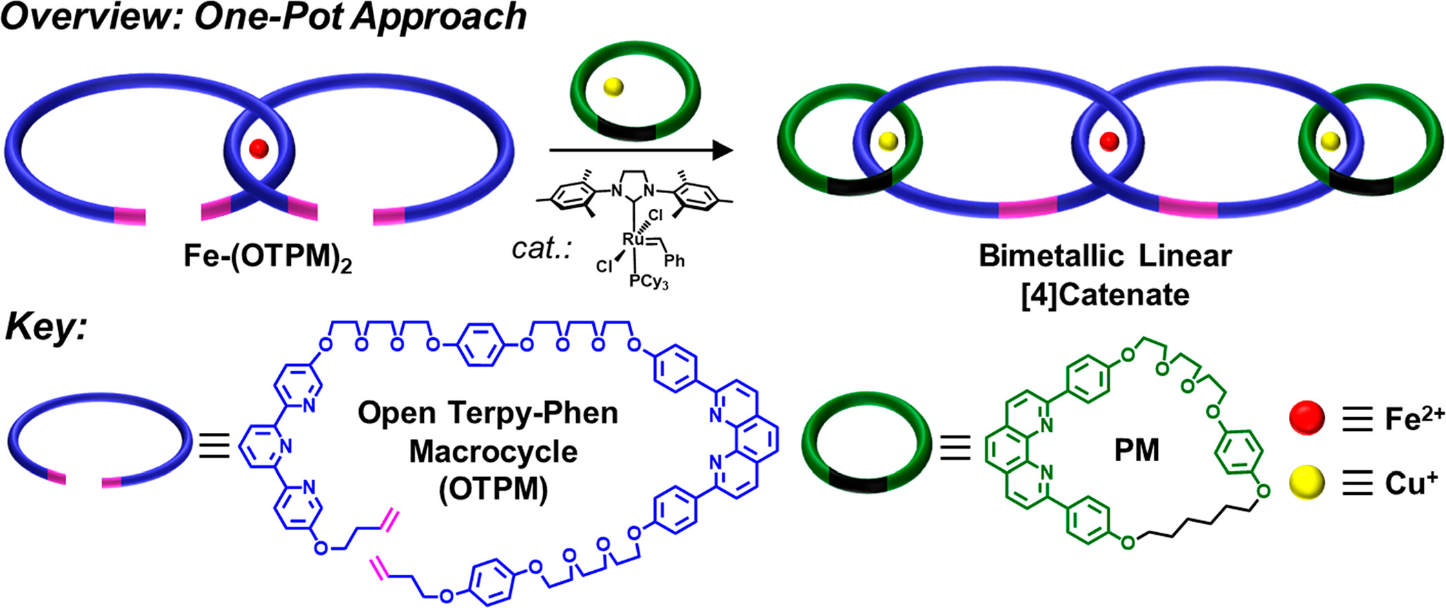 Overview of a one-pot approach to form three mechanical bonds in one step. (Photo courtesy of Barnes Lab)